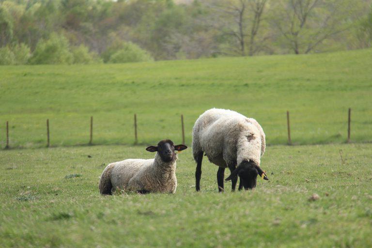 イメージ図/Sheep Ranch Yamamura
