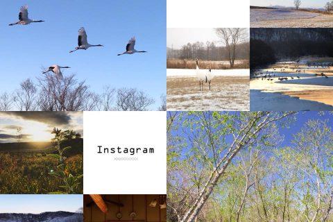イメージ図/公式instagramを始めました